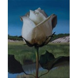 White Rose on the Moors